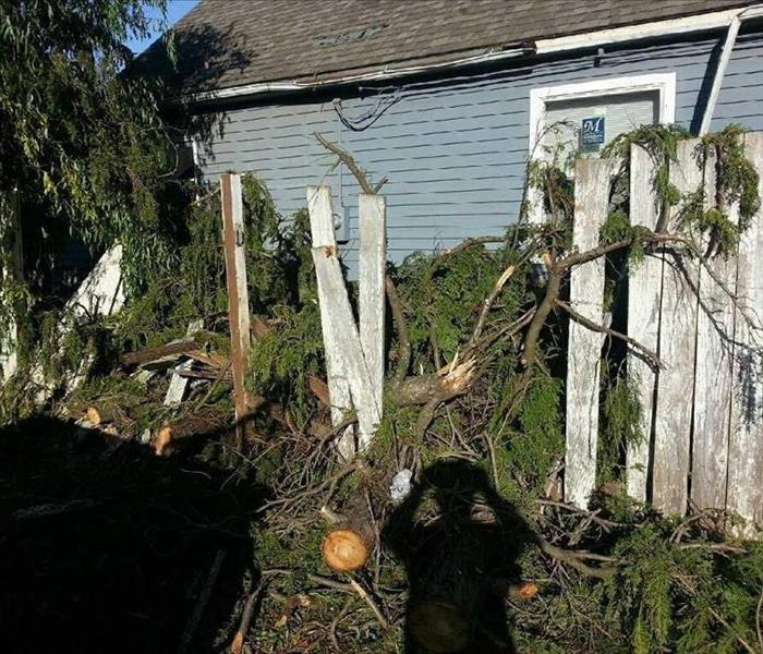 Windstorm Causes a Tree to Damage a Fence in Orient