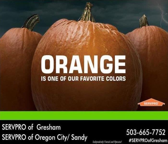 "Three pumpkins with white text saying "" Orange is one of our favorite colors"" over top of the pumpkins."