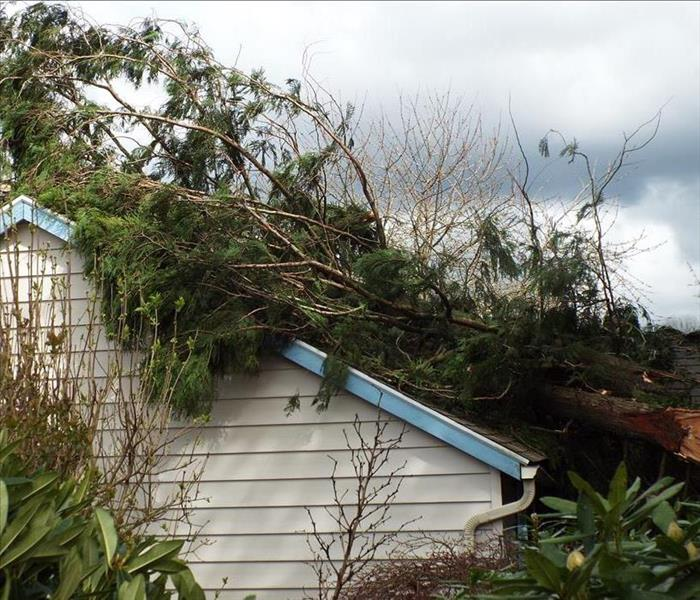 Storm Damage Windstorm in Troutdale Causes Tree to Fall on Home