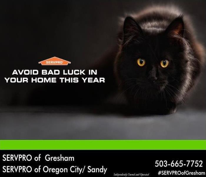 "Black cat with yellow eyes. Words ""Avoid bad luck in your home this year"" underneath the SERVPRO logo."