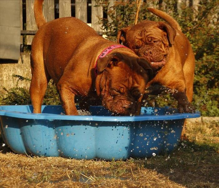 Community Do You Have a Pool for Your Pet in the Gresham Area?